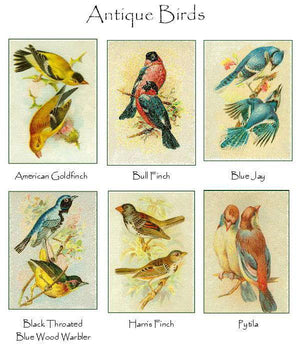 Vintage Bird Note Cards