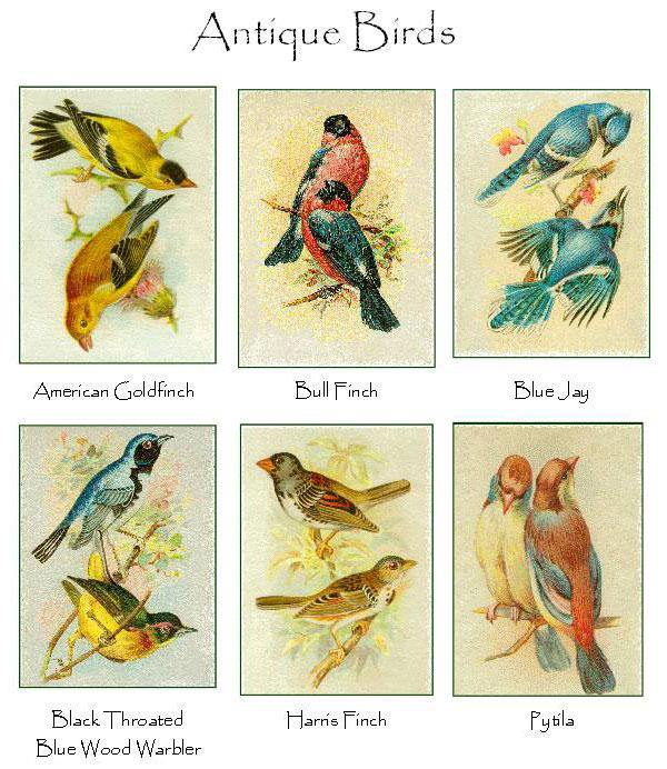 Antique Birds Notecards