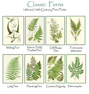 Antique Fern Note cards