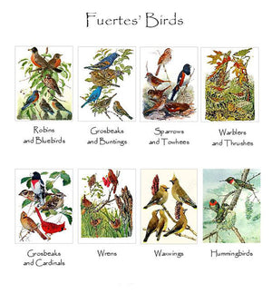 Vintage Fuertes' Bird Note Cards