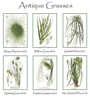 Vintage Grass Notecards