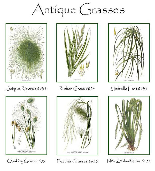 Antique Grasse Notecards