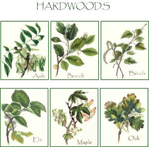 Vintage Hardwood Tree Note Cards