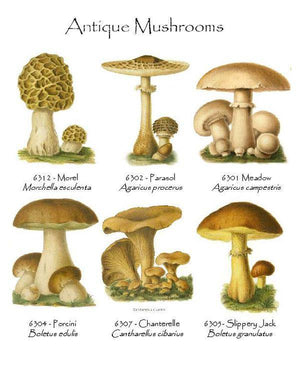 Vintage  Mushrooms Notecards