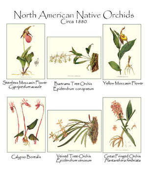 Native Orchid Notecards