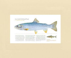 Bear Lake Cutthroat Trout
