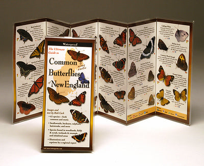 COMMON BUTTERFLIES OF THE NORTHEAST- FOLDING GUIDE