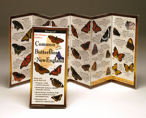 Common (and some Exotic) Butterflies of New England