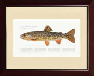 Coastal Cutthroat Trout