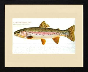 Coastal Rainbow Trout