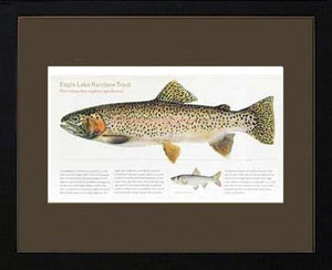 Eagle Lake Rainbow Trout