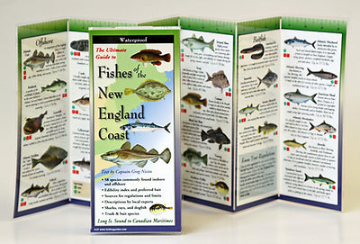 FISHES OF THE NEW ENGLAND COAST - FOLDING GUIDE