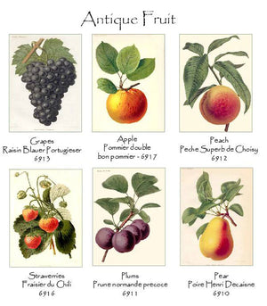 Vintage Fruit Note cards
