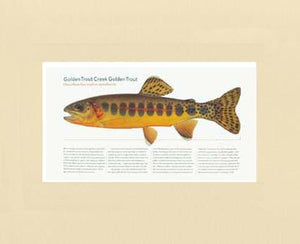 Golden Creek Trout