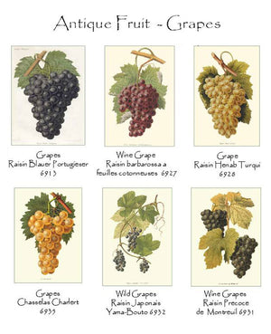Vintage Grape Note Cards