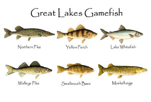 Great Lakes Gamefish