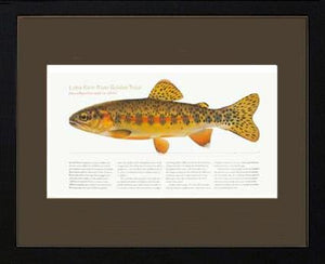 Little Kern River Golden-Trout