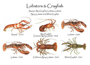 Lobsters & Crayfish