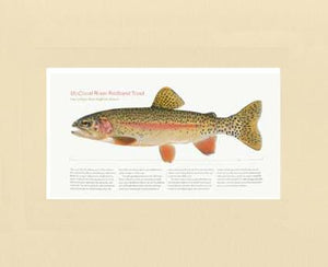 McCloud River Redband Trout
