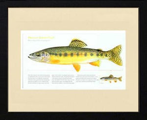 Mexican Golden Trout