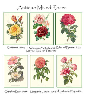 Vintage Mixed Rose Note Card Set