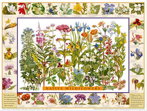 Native Wildflowers Species Poster Identification Chart