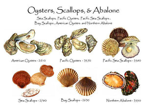 Oysters & Scallops