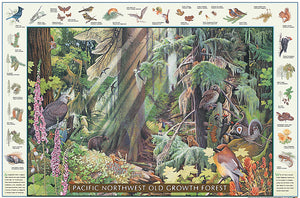Pacific Old Growth Forest Species Poster Identification Chart