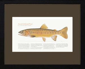 Paiute Cutthroat Trout