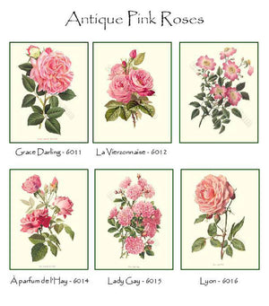 Vintage Pink Rose Note Card Set