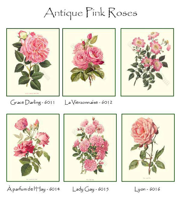 Pink Roses Notecards