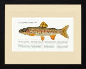 Poison Creek Redband Trout