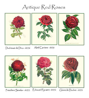 Vintage Red Rose Note Card Set