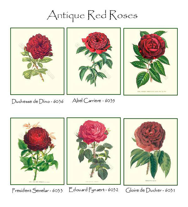 Red Roses Notecards