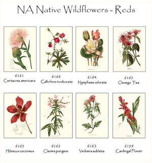 Red Wildflower Flower Note Card Set