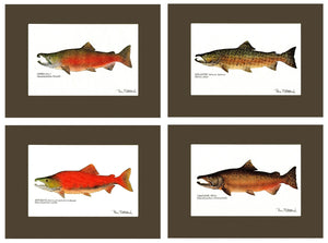 Salmon Fish Print Wall Art Set