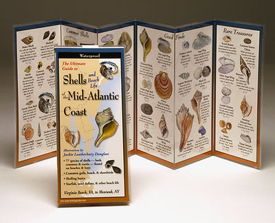 SHELLS OF THE MID-ATLANTIC COAST FOLDING GUIDE