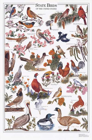 State Birds Poster Identification Chart