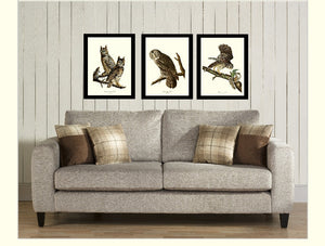 Audubon Owl Wall Art Print Set
