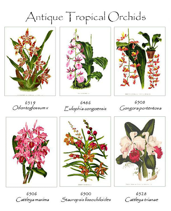 Tropical Orchids Note Cards