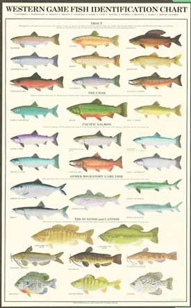 Western Gamefish Species Identification Poster