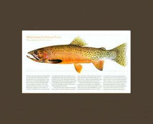 Westslope Cutthroat