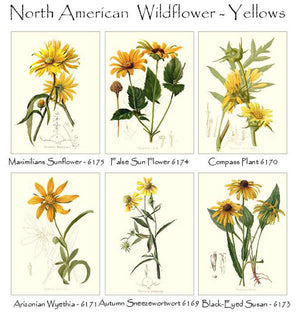 Yellow Wildflower Notecards