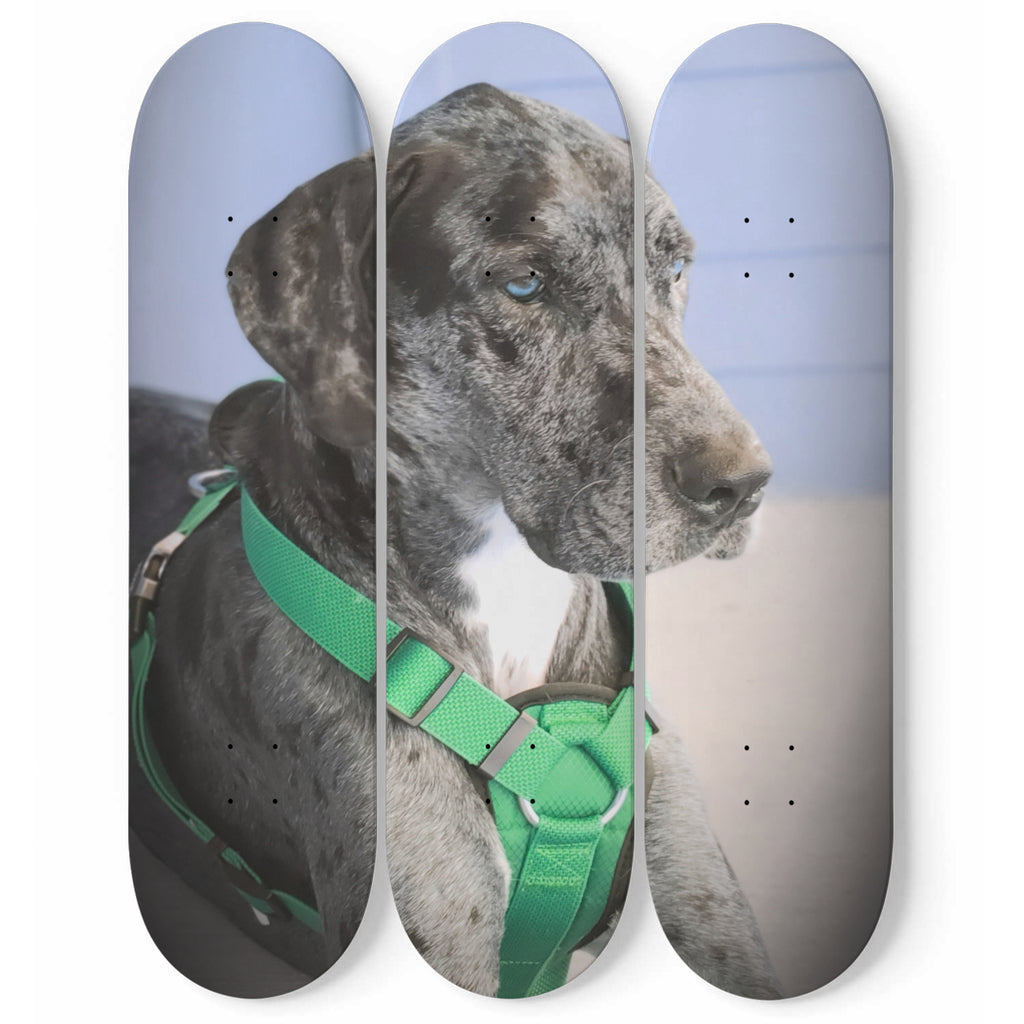 Great Dane Skateboard Wall