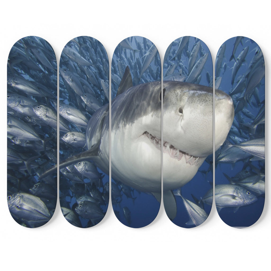 Deep Blue Shark 5 Piece Skateboard Wall Art