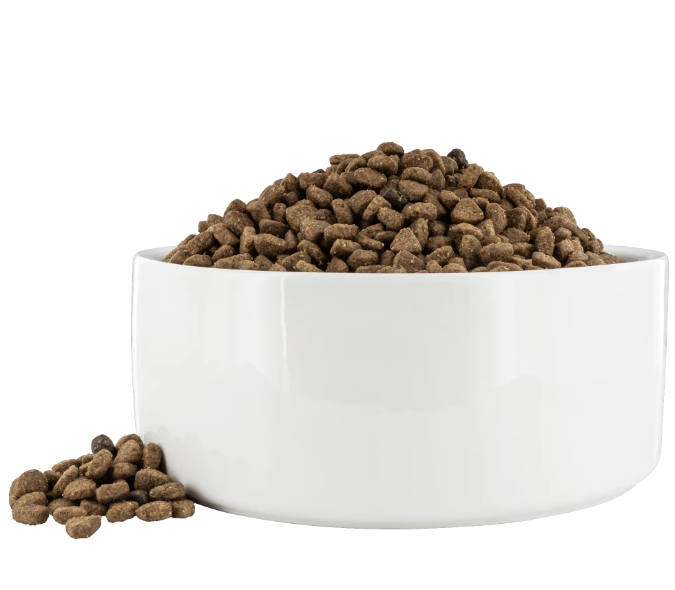 "Pawsonalize ""Addison"" Dog Bowl"
