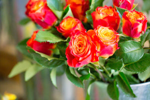Blue Mountains Florist Botanical Art Lawson Roses