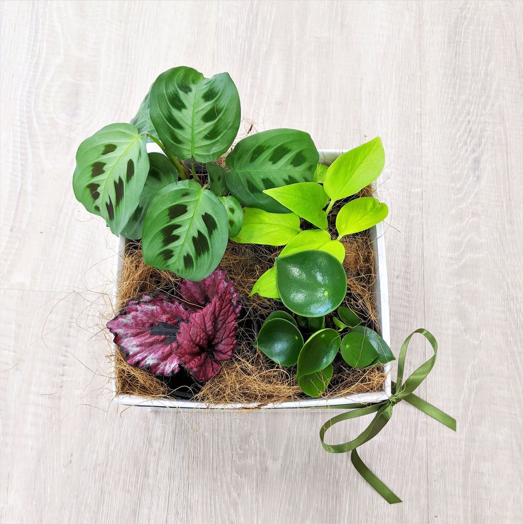 Blue Mountains Florist Botanical Art Flower Delivery Indoor Plants Mixed Box
