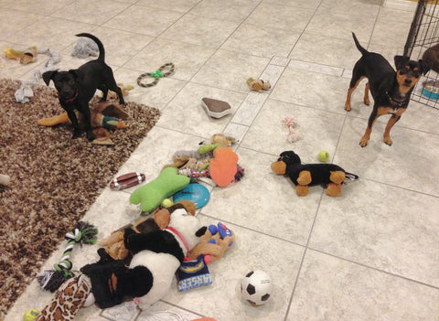 "Teaching your dog to ""Clean up"" her toys"