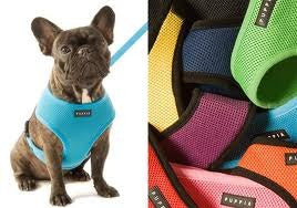 Puppia Soft Harness & Leash